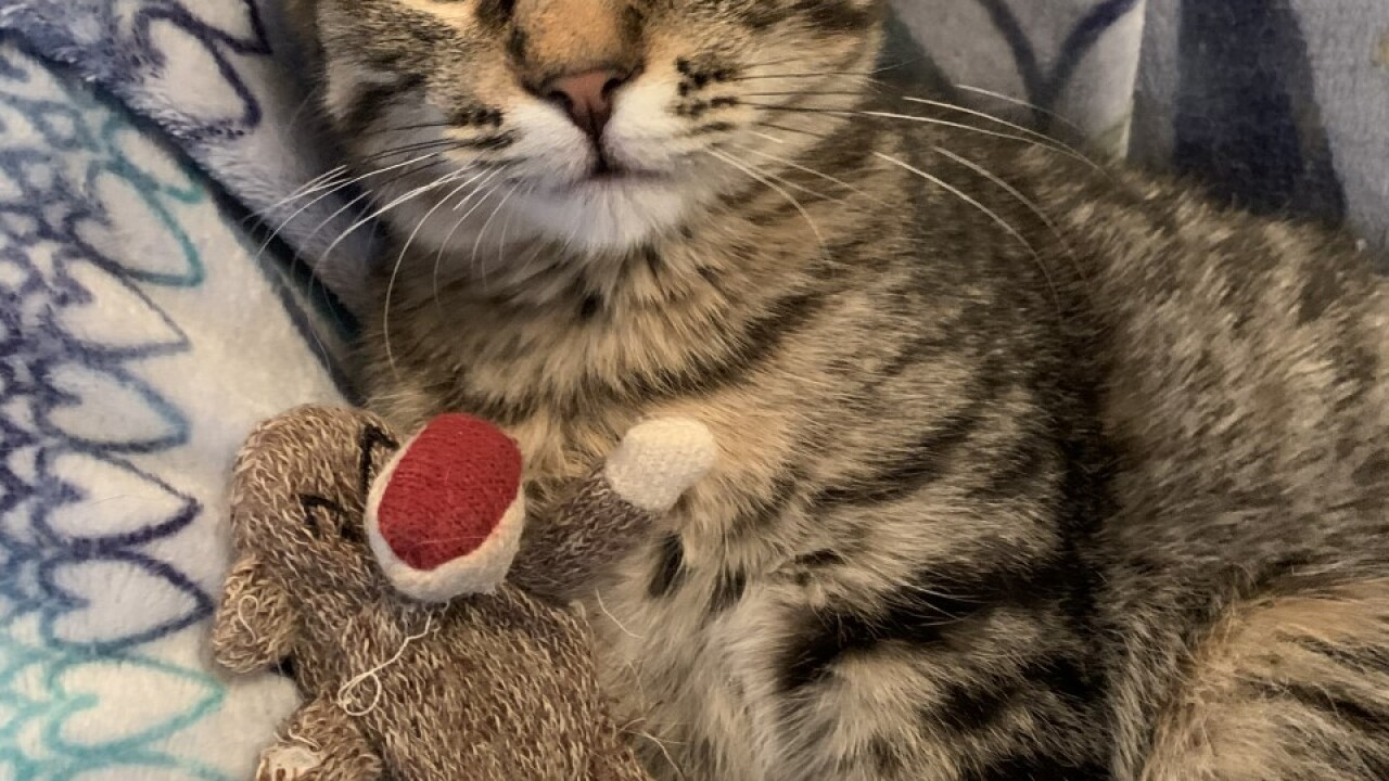 GMA Pet of the Week: Hollyberry