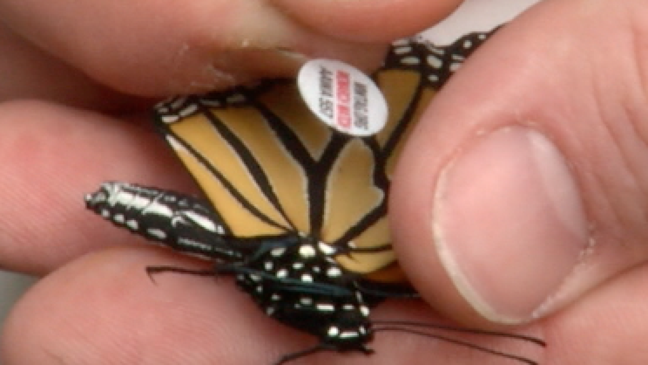 University at Buffalo students track monarch butterflies