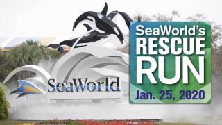 WPTV-SEAWORLD-RESCUE-RUN.jpg