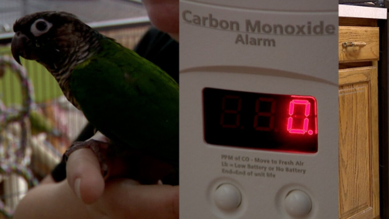 Two dead birds, carbon monoxide, and a gas range to blame?