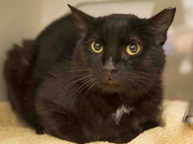 Adoptable pets from Arizona Humane Society and Maricopa County Animal Care (5/2)