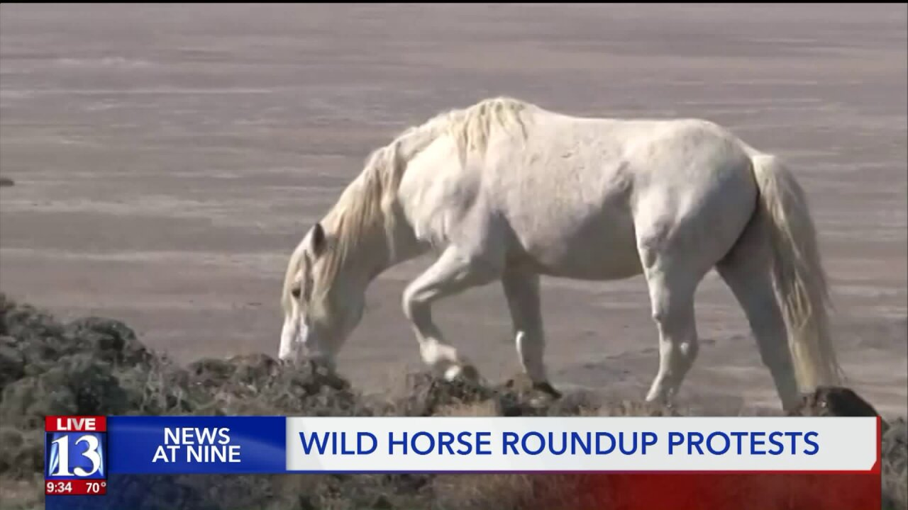 Protesters say the government is mistreating wild horses and misinforming thepublic