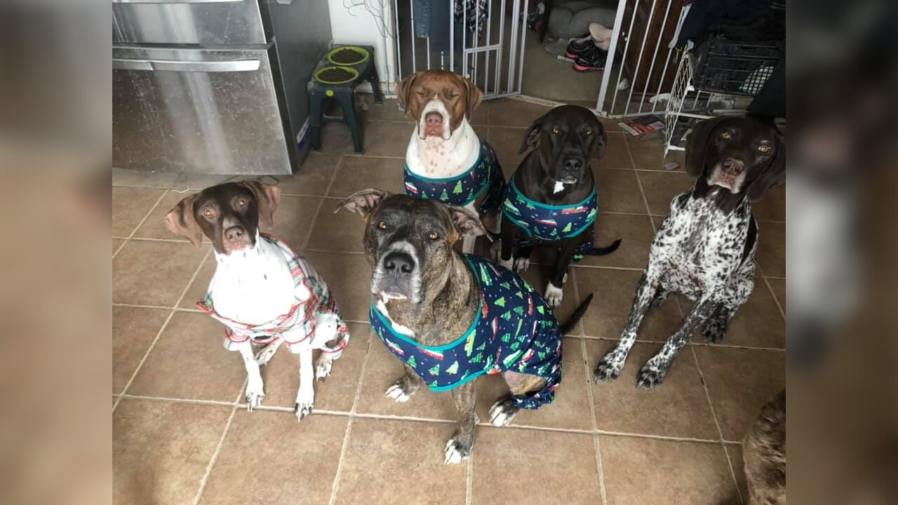 Jager, Swarley, Bella, Chunk and Jafar from Emily Grant Suiter.jpg