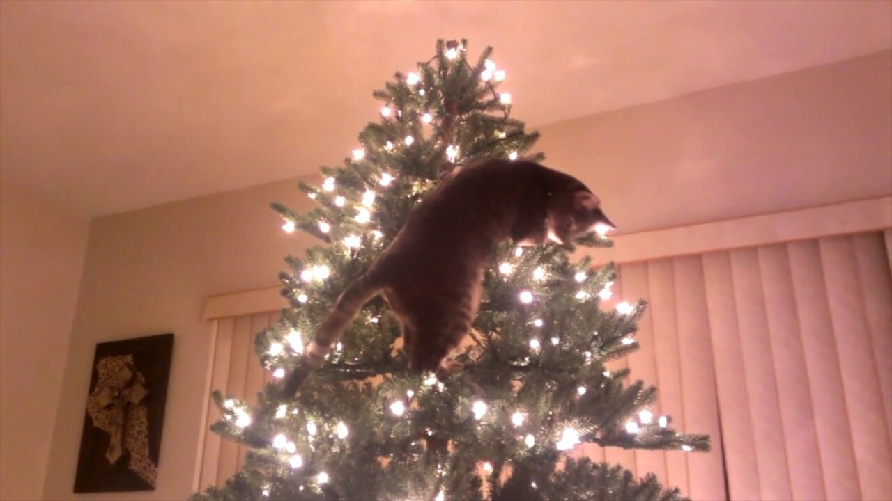Keep your pets safe from these holidaydangers
