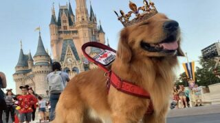 This Service Dog Met Dug From 'Up' At Disney World And It Was Too Adorable