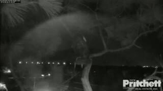Eagle cam owl attack 9-26-19.jpg