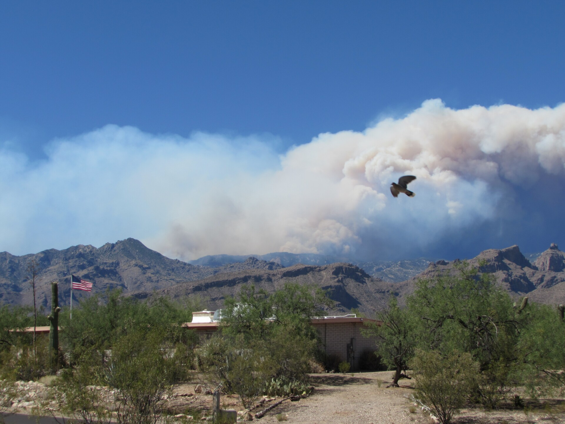 The Bighorn Fire as seen from a distance with a dove flying across in the foreground