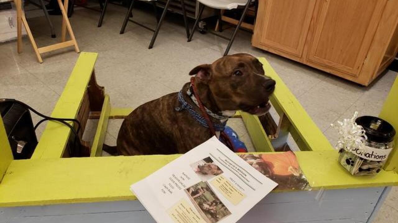 Community raises funds to help three-legged dog