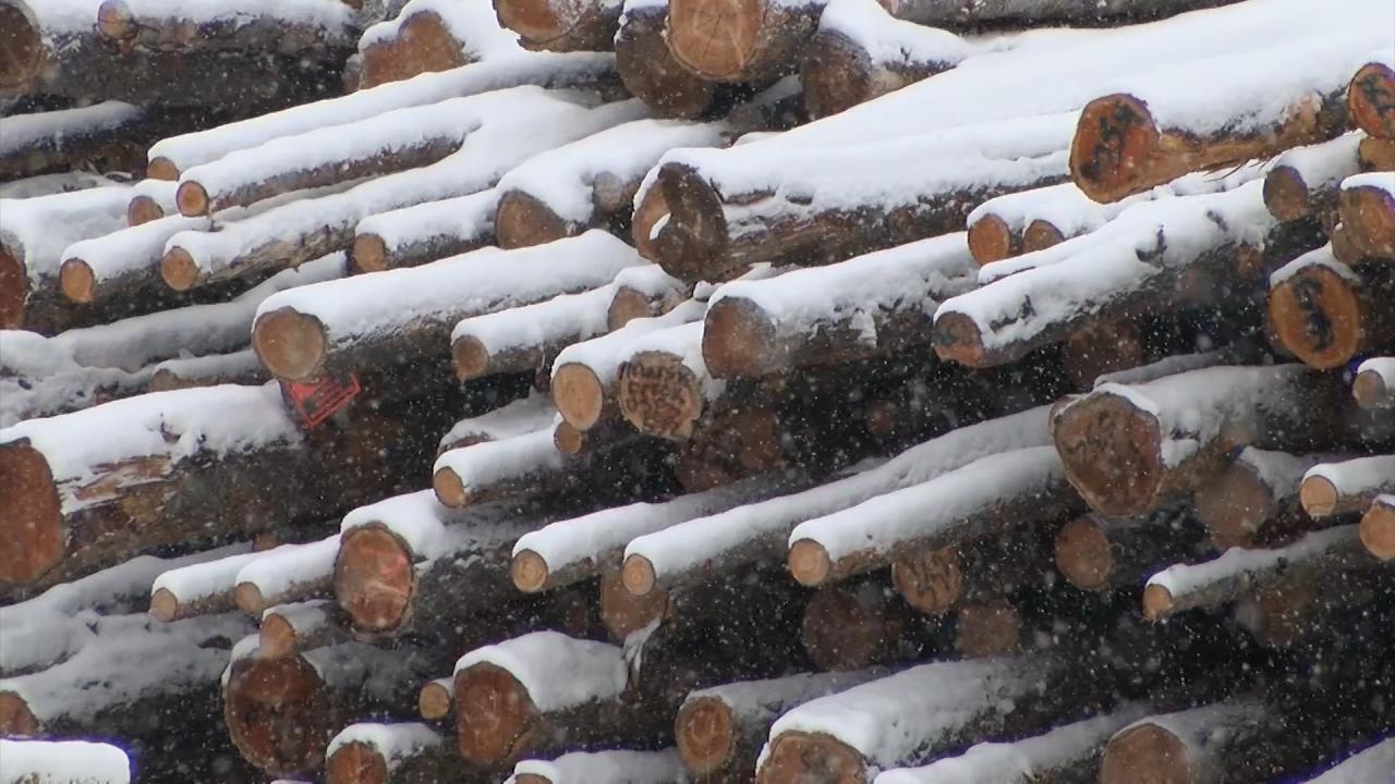 Marks Lumber Timber