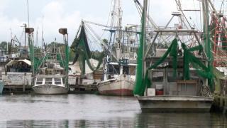 Delcambre Shrimping boats.PNG