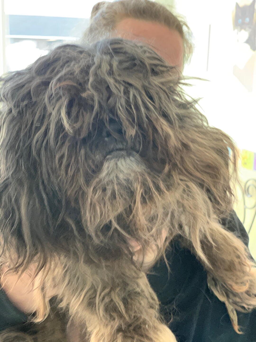 Photos: Local rescue removes almost 9 lbs of matted hair from shih tzu, who has now found forever home