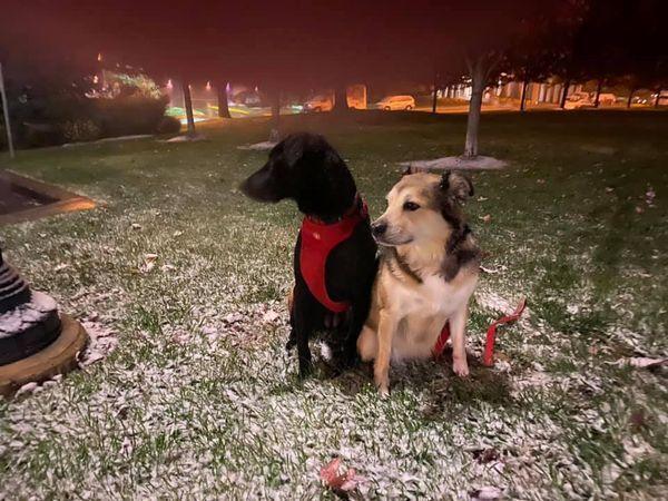 Snow October Dogs.jpg