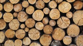 logs timber lumber