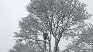 Tree branches and light post covered in snow Tuesday in Milwaukee area