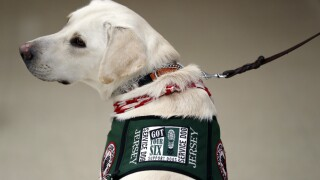 Sens. Scott, Rubio join bipartisan group to reintroduce veterans service dog bill
