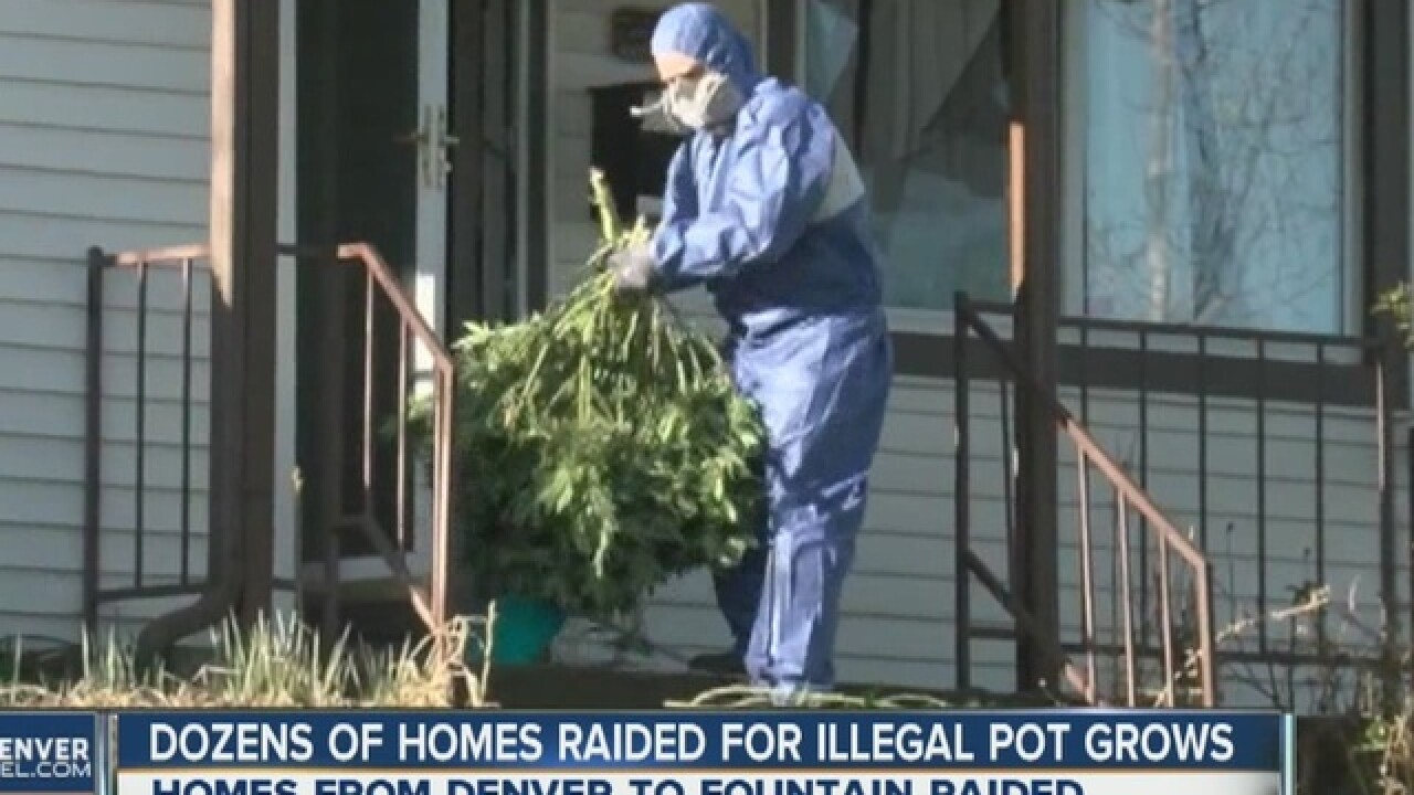 DEA seizes pot plants from home in Denver