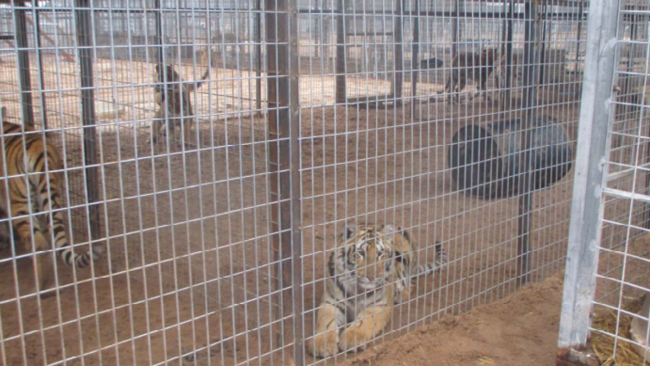 USDA inspection photo caged tigers.PNG