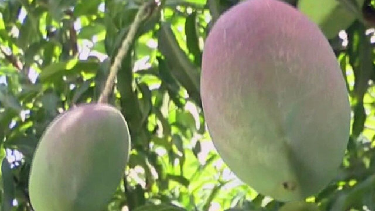 Police: Man stabs wife in fight over messy mango