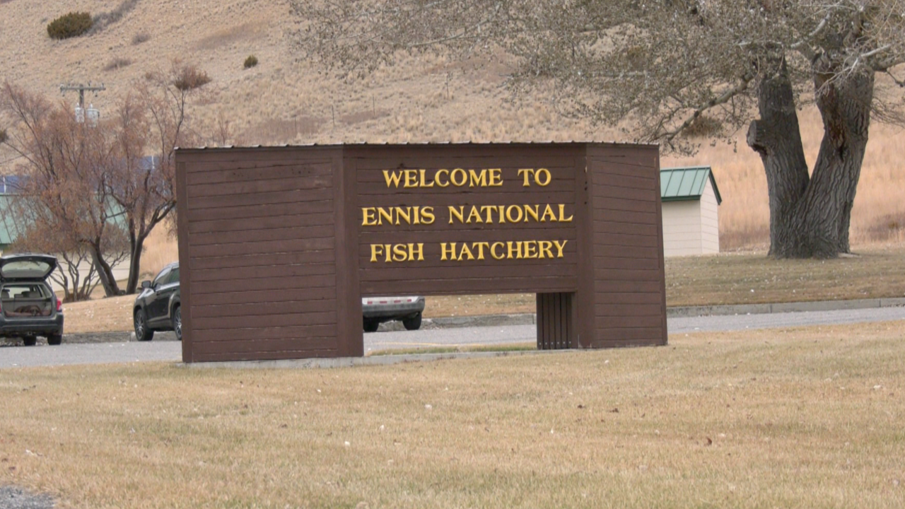 Juveniles facing charges in Ennis fish hatchery vandalism