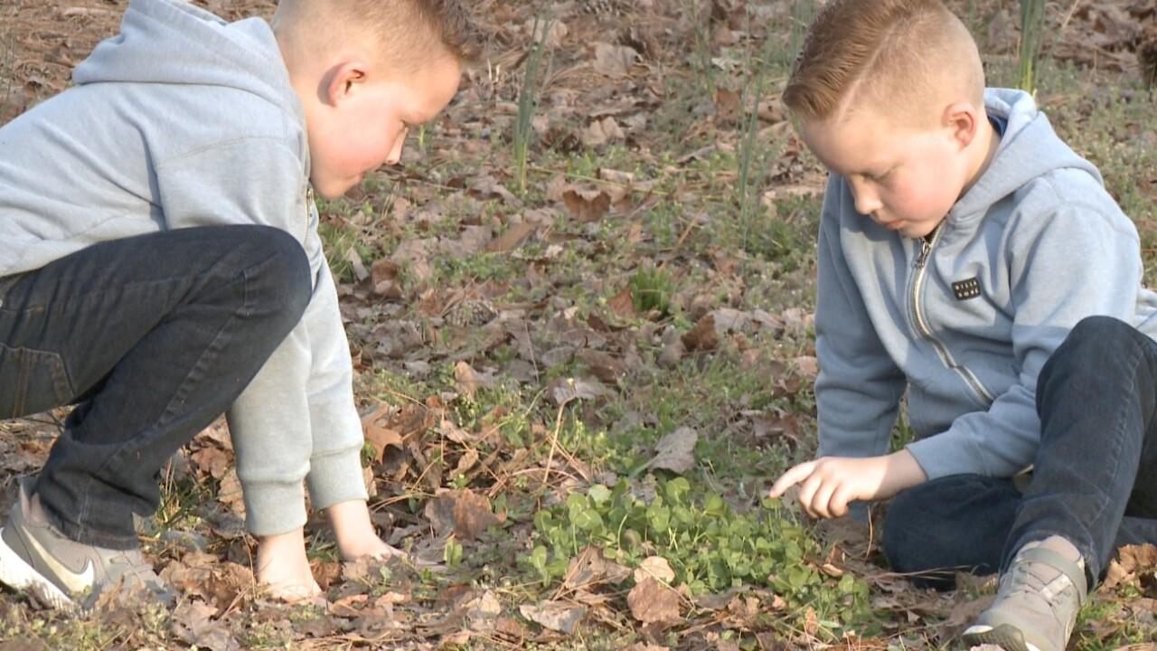 clover 7 leaf boys in yard.jpg
