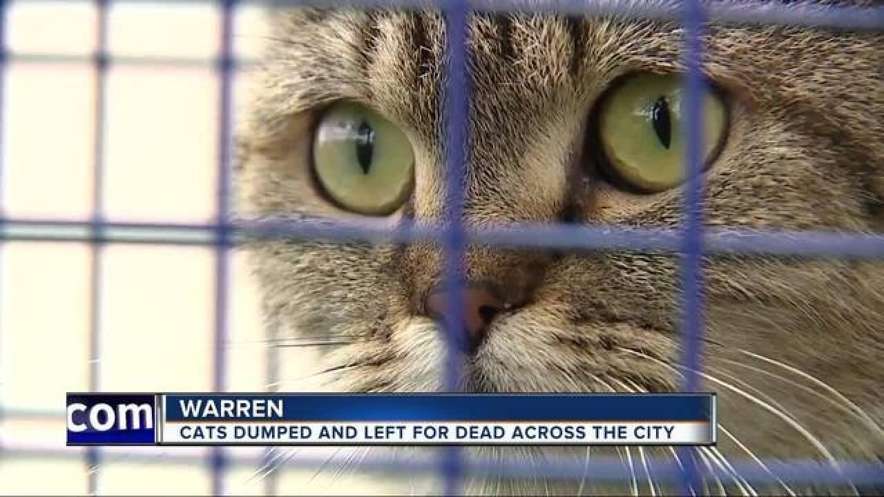 Dozens of sick cats, kittens dumped in Warren