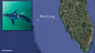 Miss-Costa-pinged-near-Tampa-2019.png