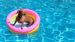 Puppy Splash.jpg
