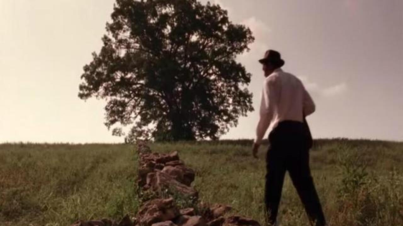 Oak tree seen in 'Shawshank' is knocked down