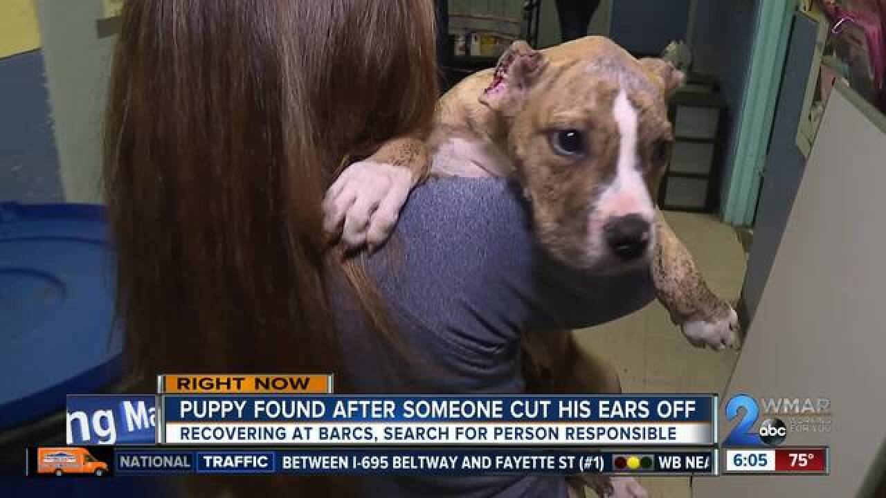 Search is on for person who cut puppy's ear off