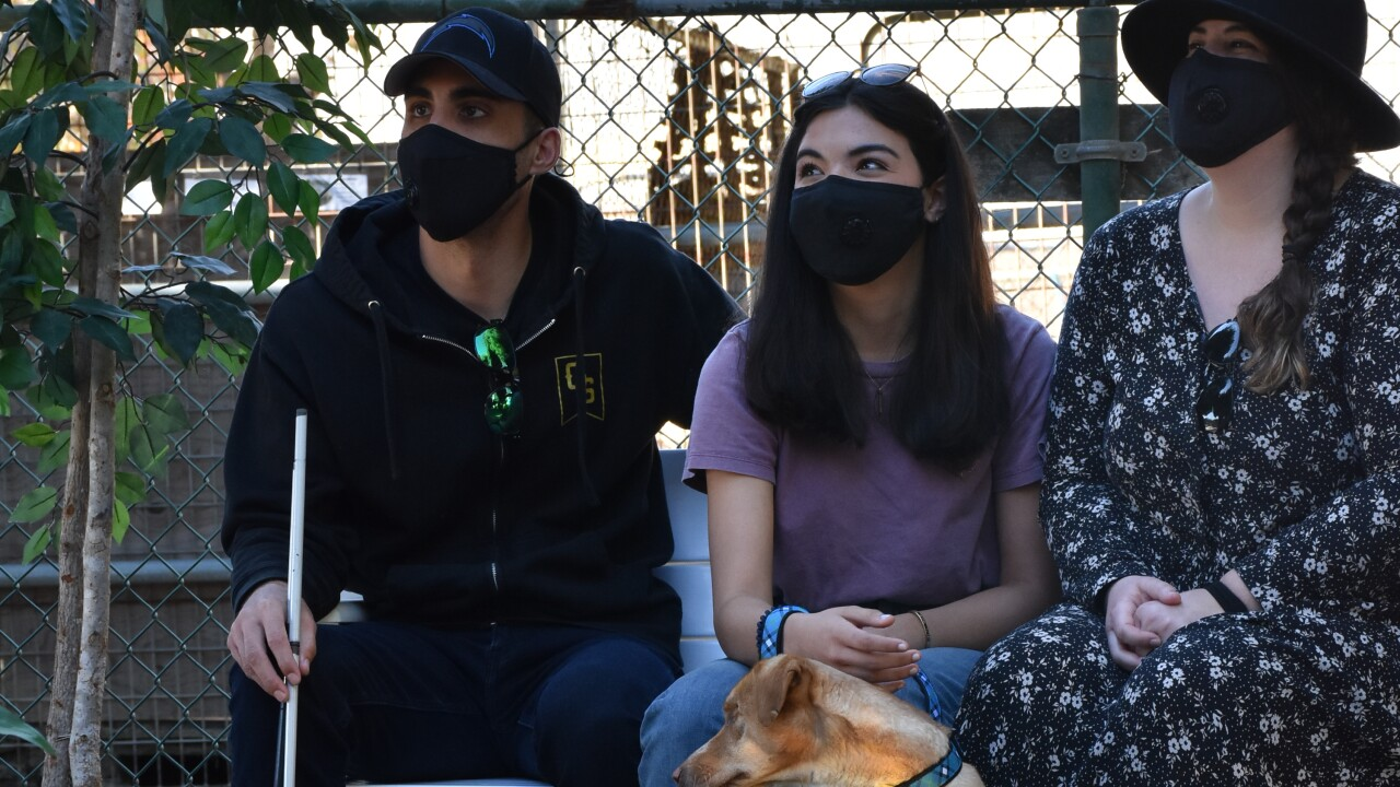 louis blind dog 3.JPG