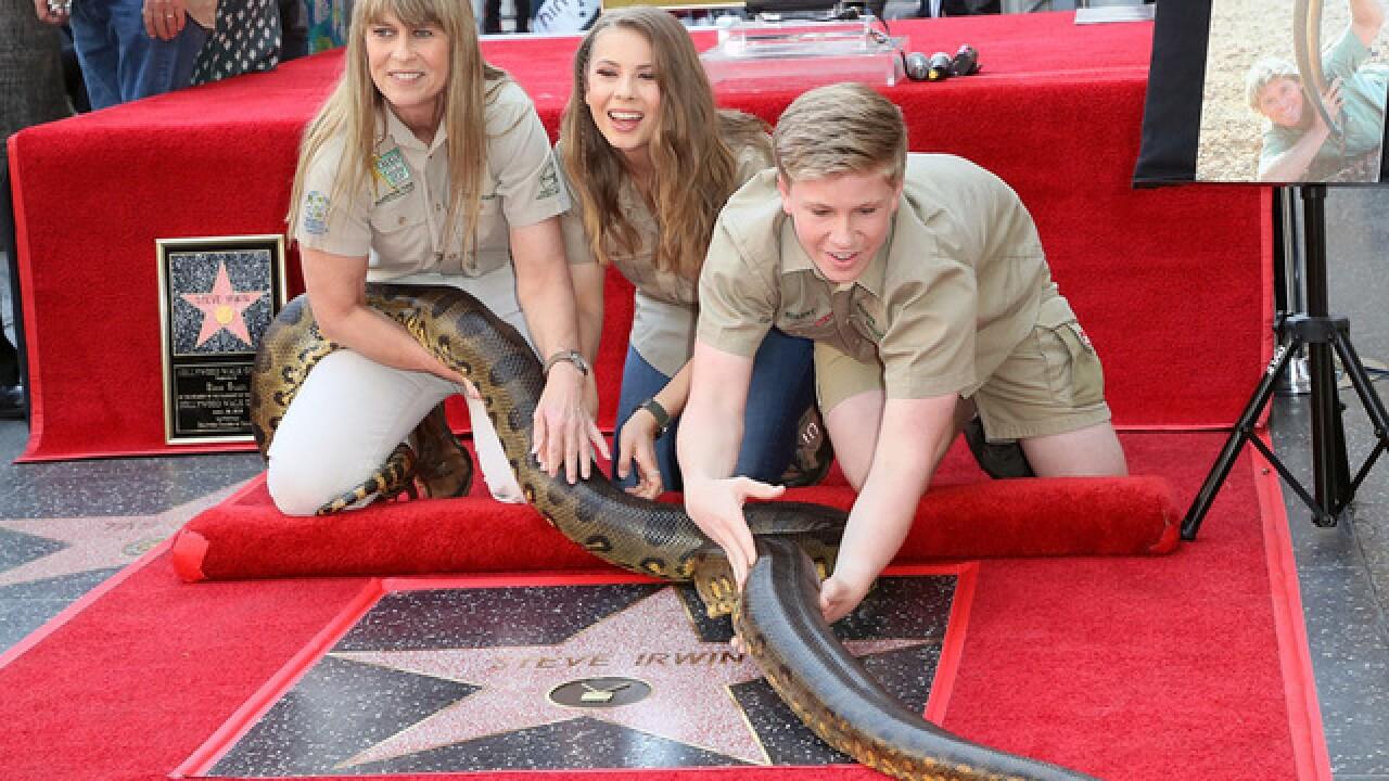 Crocodile Hunter Steve Irwin Receives Posthumous Walk Of Fame Honor