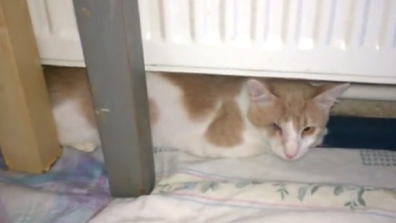 WATCH: One-eyed street cat's amazing rescue transformation