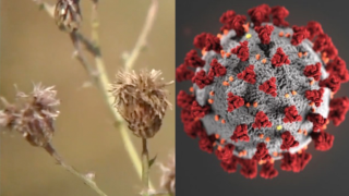 How to tell the difference between allergy symptoms and COVID-19