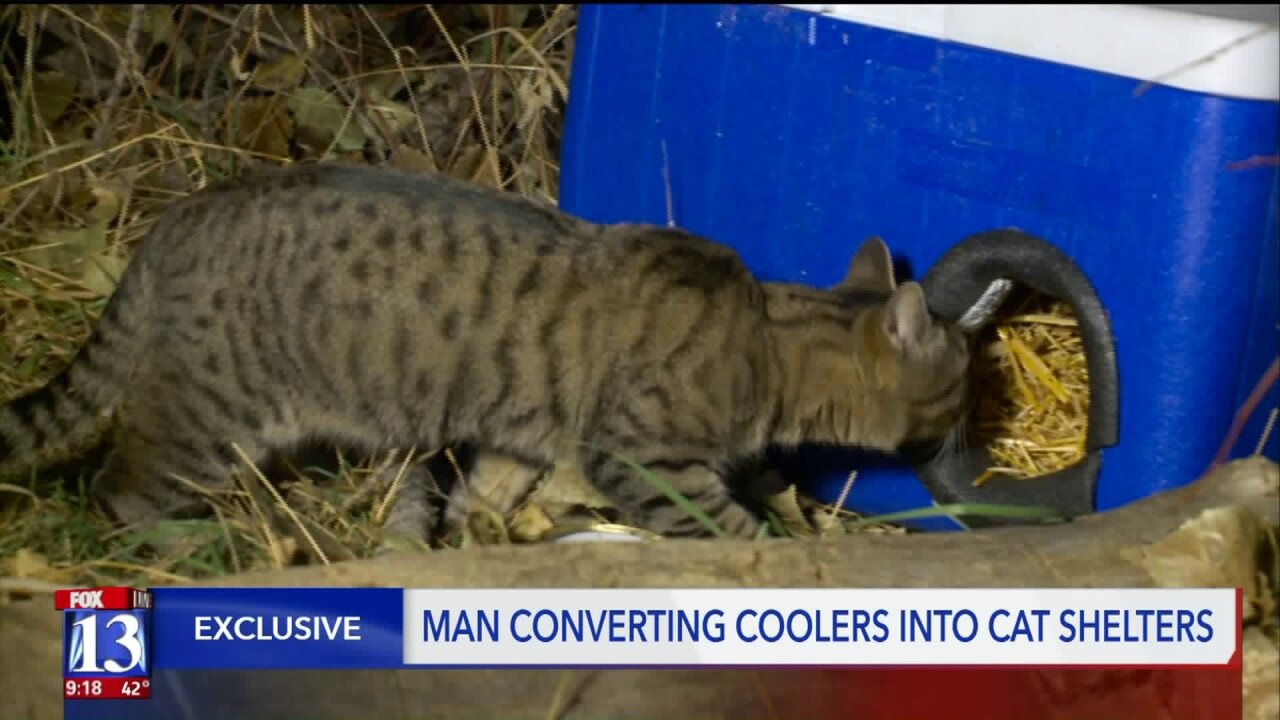 Utah man creates 'Cat Coolers' to help feral cats escape winter cold