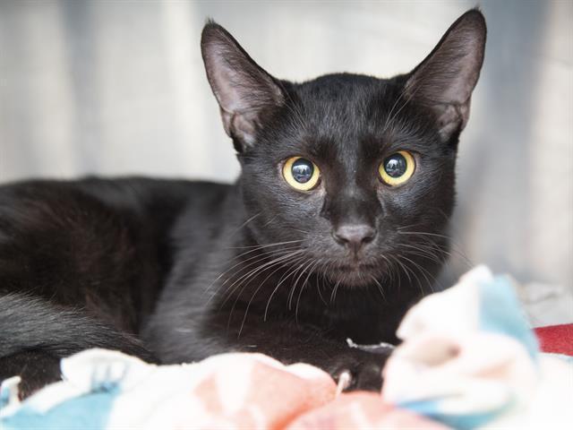 Adoptable pets from Arizona Humane and Maricopa County Animal Care (10/31)
