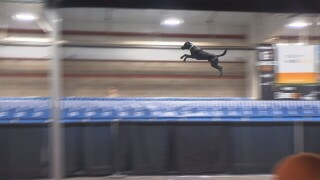 Dogs compete at Great Rockies Sportshow