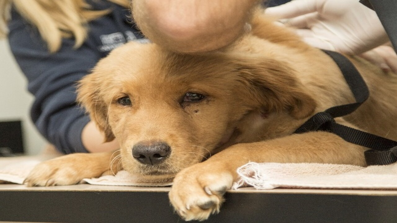 Abused Tempe pup, two cats on road to recovery