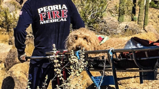 Peoria Firefighters save dog