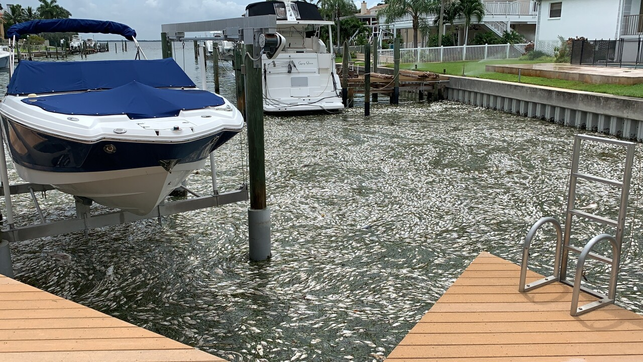 Red tide cleanup