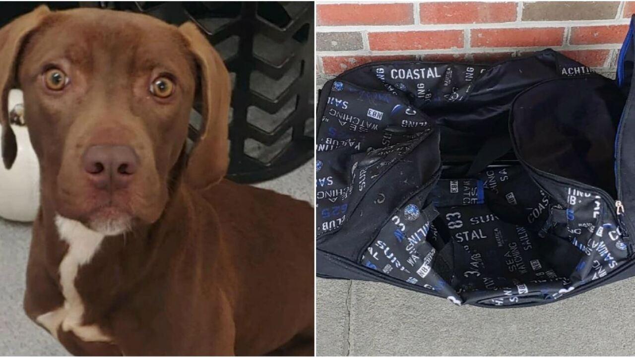 Abandoned dog found stuffed in dufflebag