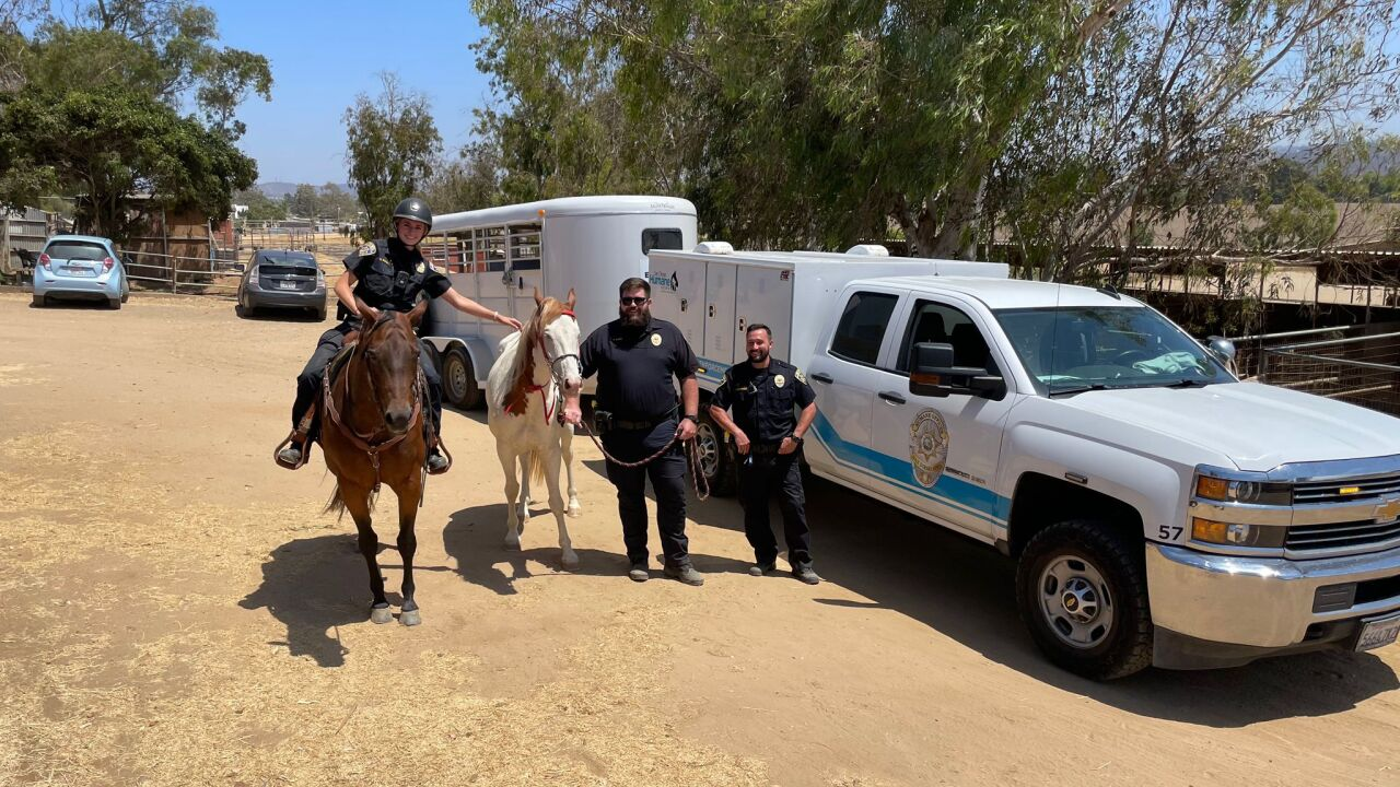 Deaf horse Tonto rescued