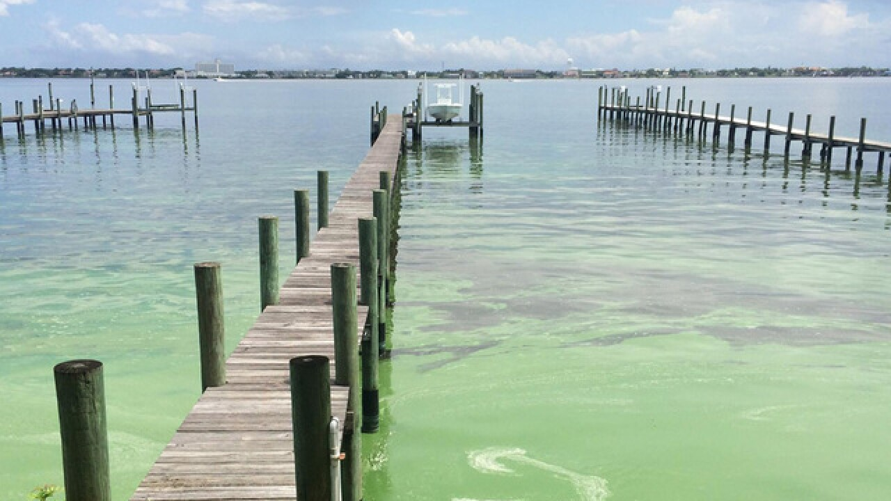 Researchers learning more about possible exposure to microcystin by breathing air near toxic algae blooms