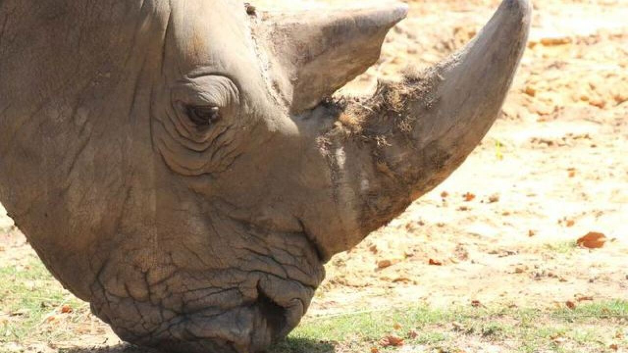 Tulsa Zoo mourns passing of Buzbie the Rhino