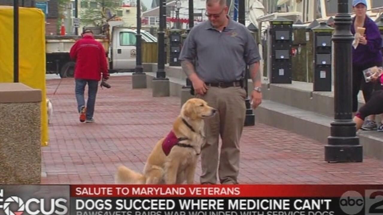 Service dogs help veterans through troubles