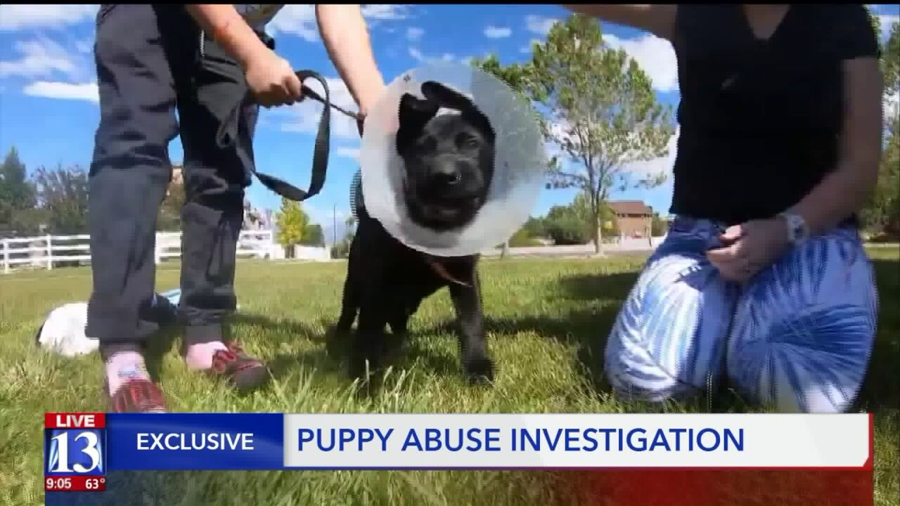 Police: Murray woman tortured, disfigured puppy for days to 'keep the dog quiet'