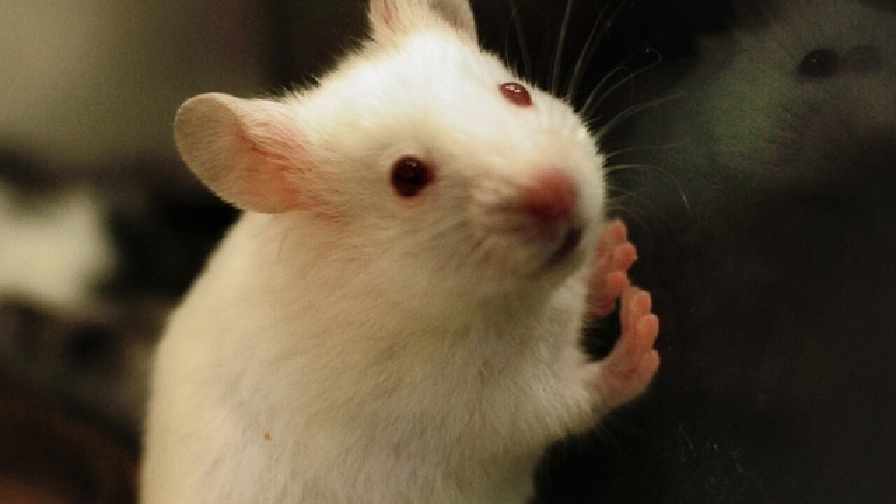 Mice eat car wiring, causing hundreds of dollars in damage