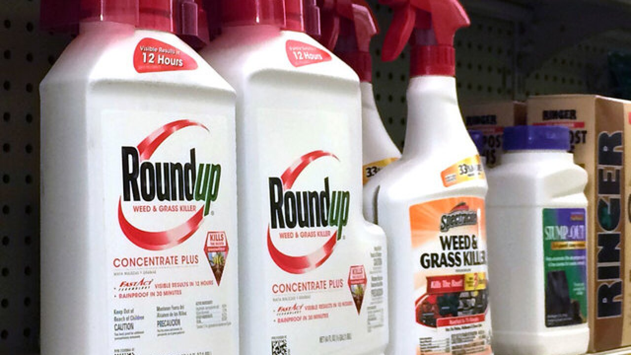 Ingredient in popular weed killer Roundup going on list as cancerous