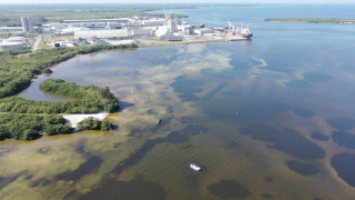 piney point water in tampa bay2.png