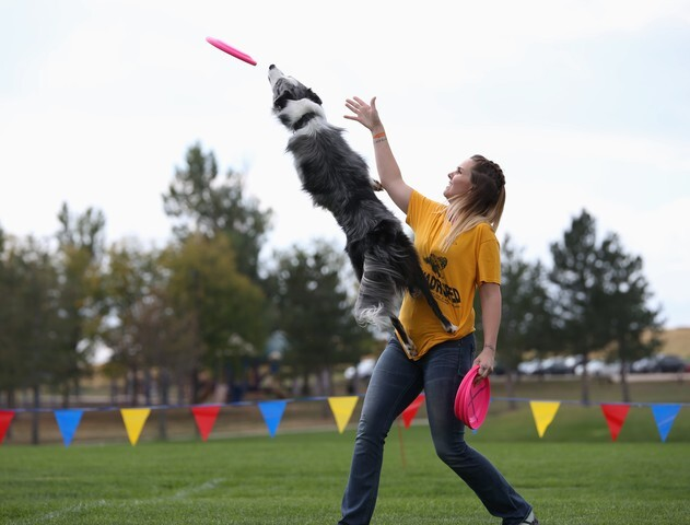 Colorado Disc Dogs will show off their skills this weekend