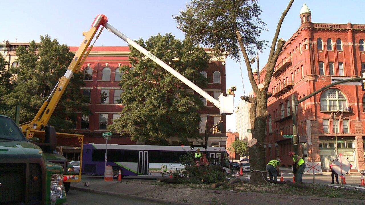 Historic oak tree chopped down for Maggie Walkerstatue